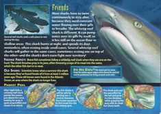 Name: Whitetip Reef Shark Category: Monsters of the Deep Card Number: 92 Front: Whitetip Reef Shark Monsters of the Deep card 92 front Back: Whitetip Reef Shark Monsters of the Deep card 92 back Trading Card: Marine Archaeology, Biology Facts, Types Of Sharks, Reef Shark, Underwater Creatures, Wild Creatures, Animal Facts, Animal Species, Shark Week