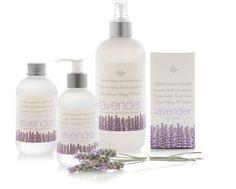 Linea Lavender