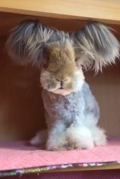 Wally the Angora bunny just hopped off Instagram and into uur hearts