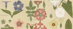 Free Public Domain | Antique illustration of the grammar of ornament by Owen Jones