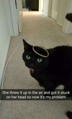 Cats Love Rubber Bands Too | 21 Really Weird Things That Cats Actually Do