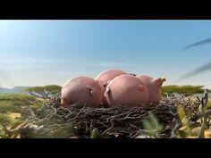 ▶ ROLLIN' SAFARI - 'Vulture' - what if animals were round? - YouTube