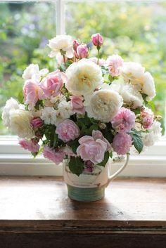 Roses in Arrangements - by David Austin