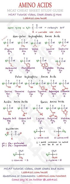 Mcat Amino Acid Chart  Study Guide Cheat Sheet For The Biology