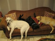 desire to inspire - desiretoinspire.net - Monday's pets on furniture - part 3