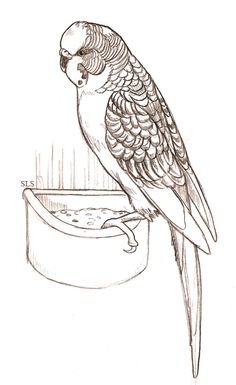 Parakeet  Beautiful Parakeet and Flower Coloring Page  Sketches