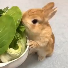 Best Rabbit Chew Toys (Buying Guide) Video Credit: Bunny Chewing Lettuce on IG Cute Bunny Pictures, Baby Animals Pictures, Cute Animal Photos, Cute Animal Videos, Baby Animals Super Cute, Cute Baby Bunnies, Cute Little Animals, Cute Funny Animals, Rabbit Eating