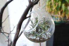 beautiful succulents #yoga #rayoga #oc #costamesa #studiolove