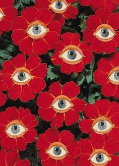Eyes on Marigold 'Disco Red', Tagetes patula. pinned with Bazaart