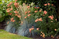 My Favorite Plant Combinations 24