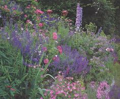 Gardeners Book of Color; Andrew Lawson
