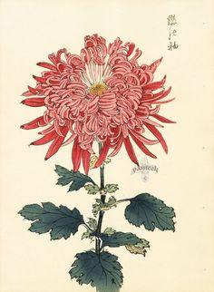 Keika Hasegawa Chrysanthemum Wood Block Prints 1893 | Graphics ...