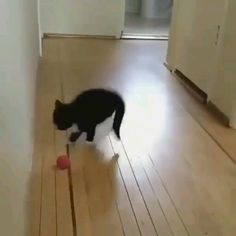 Sweety cat likes to play funny cats videos cute cat video funny compilation for pets The most beautiful picture for Cute Cat Gif, Cute Funny Animals, Cute Baby Animals, Funny Cute, Crazy Funny, Wild Animals, Hilarious, Cute Kittens, Kittens And Puppies