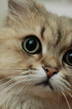 Close kitty!