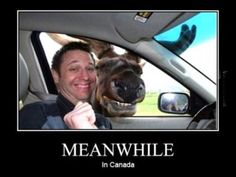 Meanwhile in Canada. Looking at the lighter side of life in Canada. Don't miss 40 Funny meanwhile in Canada photos that will blow your mind. - Page 3 of 8 Funny Cute, The Funny, That's Hilarious, Super Funny, Meanwhile In Canada, Funny Animals, Cute Animals, Animal Memes, Smiling Animals