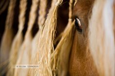 A golden Love. Horses, Hair Styles, Photos, Beauty, Hair Plait Styles, Pictures, Hair Makeup, Hairdos, Haircut Styles