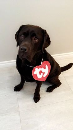 Cino wearing a SUPER cute and easy to make DIY dog Halloween costume- a TY Beanie Baby Pitbull Halloween Costumes, Diy Dog Costumes, Halloween Diy, Halloween Night, Scary Dogs, Dog Photography, Baby Prints, Dog Love, Fur Babies