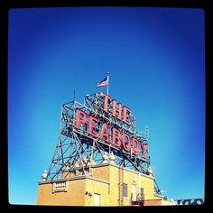 The Peabody // Memphis, TN