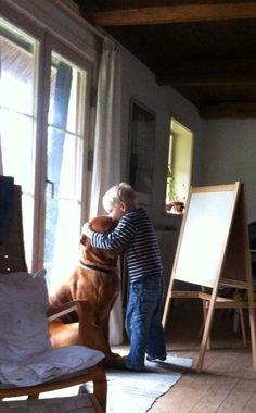 Dogue de bordeaux dog Arthur getting kisses and hugs from best friend <3