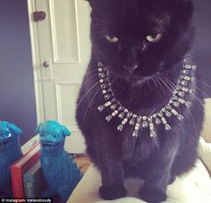 Catnip at Tiffany's: This one looks good, and she knows it