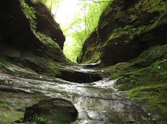 Little Grand Canyon (southern Illinois)
