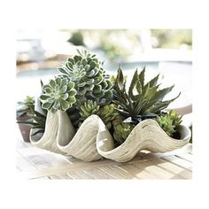 Giant clamshell with succulents