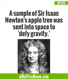 eDidYouKnow.com ►  A sample of Sir Isaac Newton's apple tree was sent into space to 'defy gravity.'