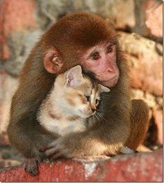 Animais amaveis carinhosos (16)