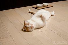 遊び終わった後、床に転がってそのままウトウトしているポッケ。         *   【お知らせ】   3月18日に発売したDVD「にゃんこんと」にポッケの動画も使われています。 ...