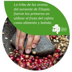La tribu de los oromo del sureste de Etiopía, fueron los primeros en utilizar el fruto del cafeto como alimento y bebida.
