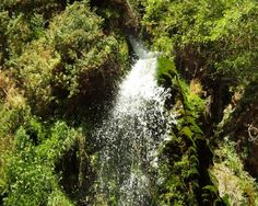 Ein Gedi Oasis and Kibbutz.  Ein Gedi is a real oasis with lush vegetation, nestled between two streams, amidst the arid landscape.