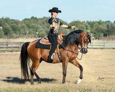 View Photos, Videos and more at The Scottsdale Showcase :: Arabian Horses, Stallions, Farms, Arabians, for sale - Arabian Horse Network, www.arabhorse.com