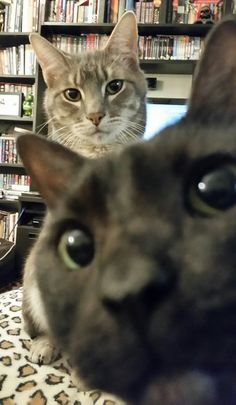 I was trying to take a photo of my cat when his brother suddenly photobombed him   http://ift.tt/1Qqoom9 via /r/cats http://ift.tt/1RlRFOE  cats funny pictures