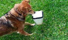 Dog body language study: Fear and what else? --eileenanddogs Dog Body Language, Language Study, Summer Dog, Dog Behavior, Free Stuff, Dog Owners, Dog Training, Trainers, Acting