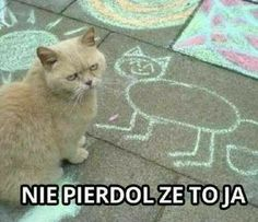 [Humor]Harry Potter Memes in Polish - Cytaty - Wtf Funny, Funny Cats, Funny Animals, Polish Memes, Boyfriend Memes, Harry Potter Memes, Animal Memes, Animal Humor, Girl Humor