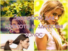 Целебные свойства ополаскиваний зверобоем для волос