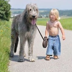"""When his Irish Wolfhound was diagnosed with cancer the little boy said """"I want to be with him while he goes to heaven."""" He patted him as his beloved dog went to sleep. Later, his parents wondered if he really understood and said, """"It's a shame dogs live a shorter life than we do."""" The little boy said, """"I know why..."""" His parents were surprised and asked him why. The little boy said, """"Humans are born and need to learn how to be kind and good. Dogs know all that, so they can go to heaven soone..."""