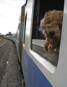 There are about 500 feral dogs in the Moscow Metro, and some of them have figured out how to commute through it. - Animals - Interesting Facts and Fun Facts - OMG Facts