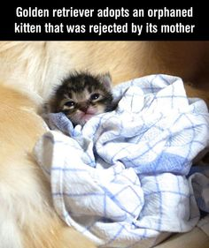 This Orphaned Kitten Was Rejected By Its Mother. Guess Who Adopted Him