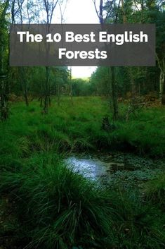 The 10 Best English Forests