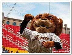 La mascota del mejor equipo de béisbol, Los Leones del Caracas!!! by gennaropascale.com, via Flickr