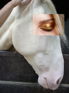Adam's Nest is thrilled to collaborate with Naro Pinosa on these exclusive postcards. His skill at the art of collage is unmatched. Equestrian fan, how about this white horse with golden eyeshadow. Exclusively at Adam's Nest x Collages, Photomontage, Collage Kunst, Metal Magazine, Magazine Art, Queer Art, Photoshop, Gifs, Photo Manipulation