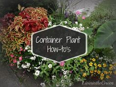 Container Plant How-to's