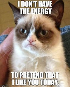 Grumpy Cat Meme Generator - Imgflip