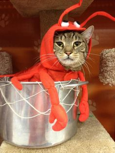 """Monk as a """"Rock Lobster"""" - Felix would kill me for sure, little Doe may tolerate the costume"""