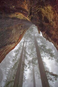 Redwoods Orick, California