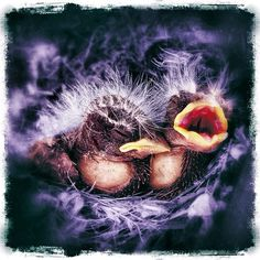 Brothers chicks.   The Instacanvas gallery for olegdimov. Buy Instagram art from olegdimov and photography.