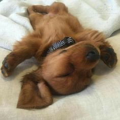I am tired today... maybe working to hard!  Lmao!