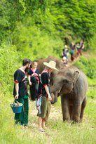 Patara Elephant Farm Thailand