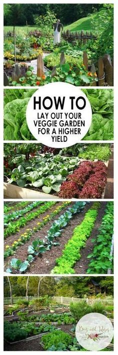 How to Lay Out Your Veggie Garden for A Higher Yield| Vegetable Gardening, Gardening Tips and Tricks, Vegetable Gardening Hacks, How to Plan A Productive Vegetable Garden, Gardening 101, Popular Pin